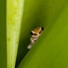 Peek A Boo by john  Lenagan
