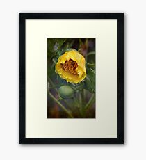 Frills And Flounce Framed Print