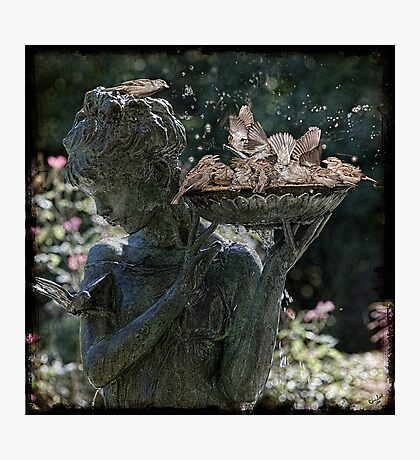 Bath Time For Sparrows Photographic Print