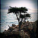 Lone Cyprus by PeggySue67