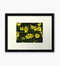 Patch of coreopsis flowers Framed Print