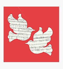 Two Musical Doves - Red & White Photographic Print