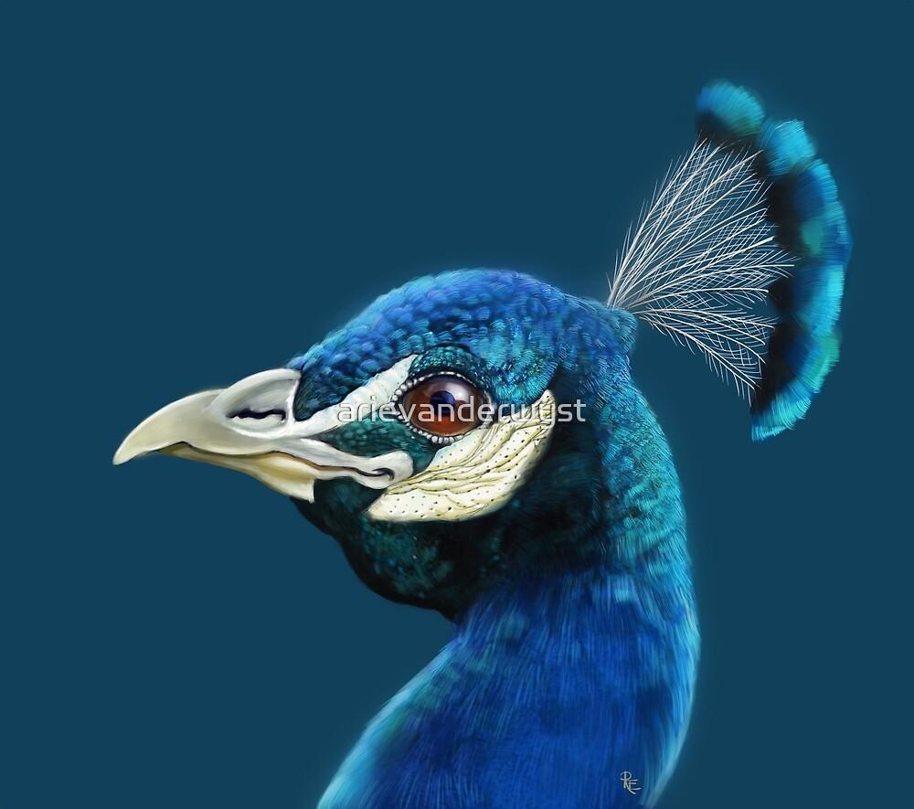 Happy Peacock by arievanderwyst