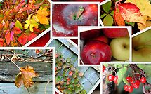 Autumn's Collage of Beauty ©  by Dawn Becker