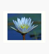 Delta lily Art Print