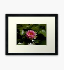 The Lonely Lily Framed Print
