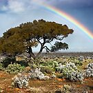 Rainbow Tree by Ben Goode