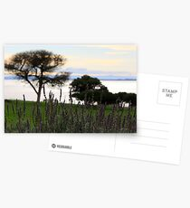 Lavendar Postcards