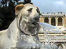 Egyptian Lion, Piaza Del Popolo, Rome, Italy by David Carton