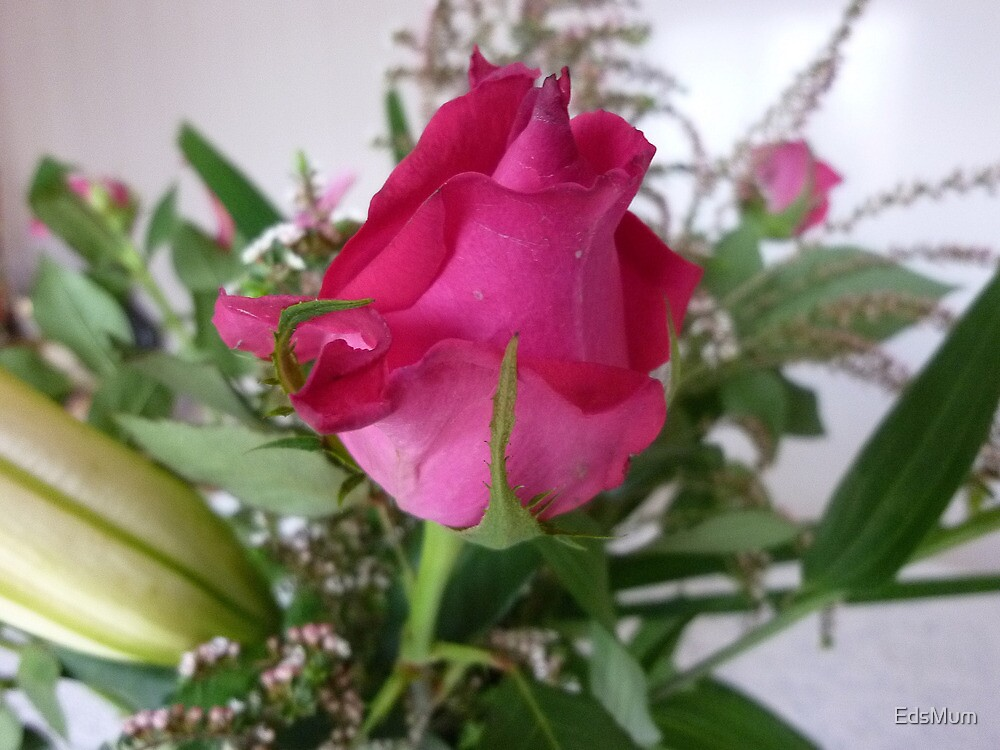 Rosebud - A beauty to unfold-Oct.2010, Spring by EdsMum