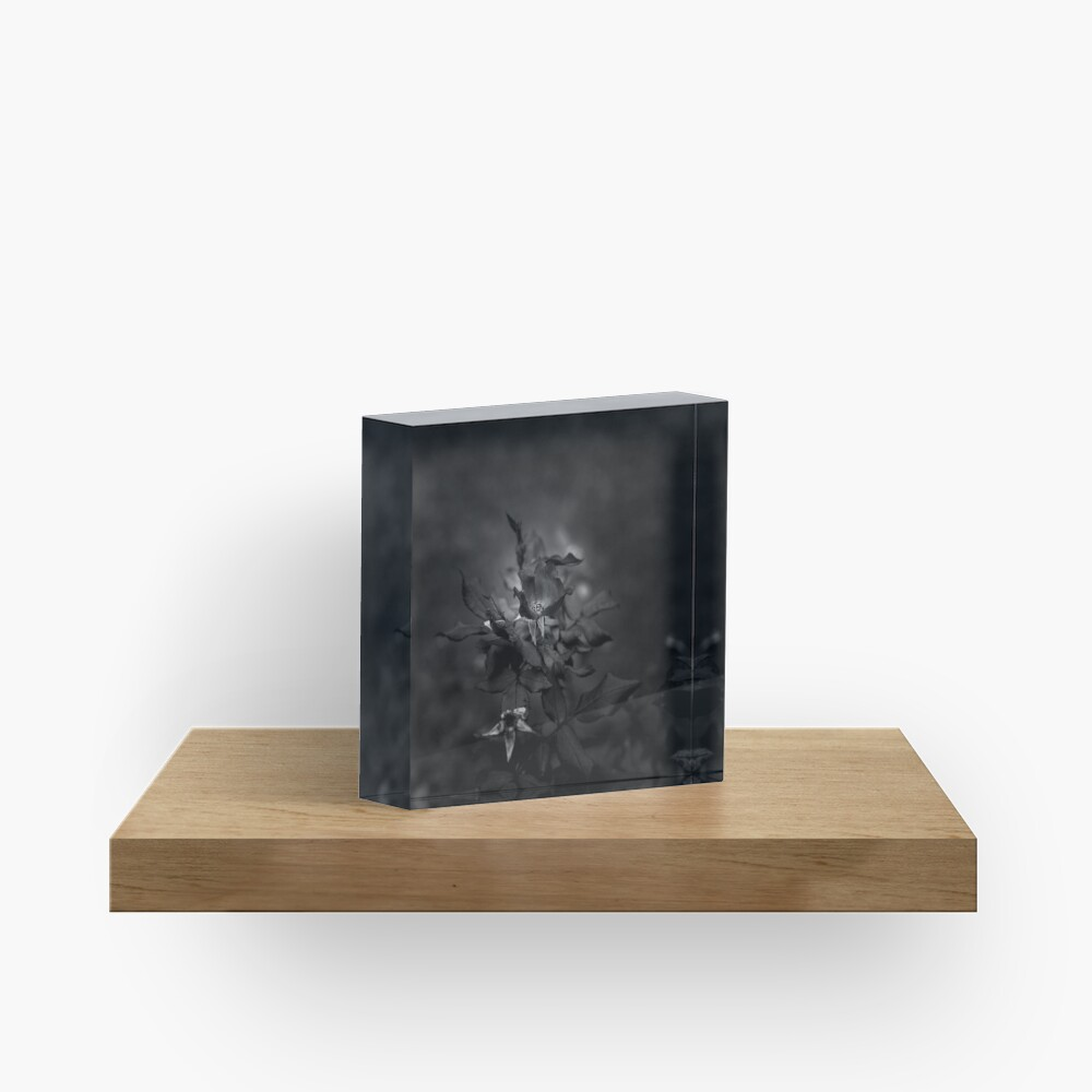 In Memory of the Loving Rose (Black and White) Acrylic Block
