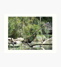 wetlands Art Print