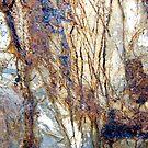 Wild Forest by Kathie Nichols