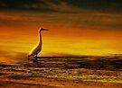 Egret on Chesil Beach, Portland, Dorset, UK by David Carton