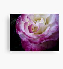 Double Delight - Rose Canvas Print