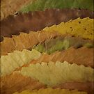 Leaf Landscape by Catherine Hadler