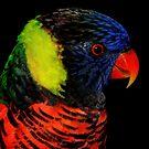 Avian Profile ~ Part 6 by artisandelimage