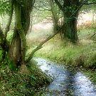 Autumn Stream by Ann Garrett