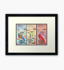 Birds Of Bermuda On Banknotes Framed Print