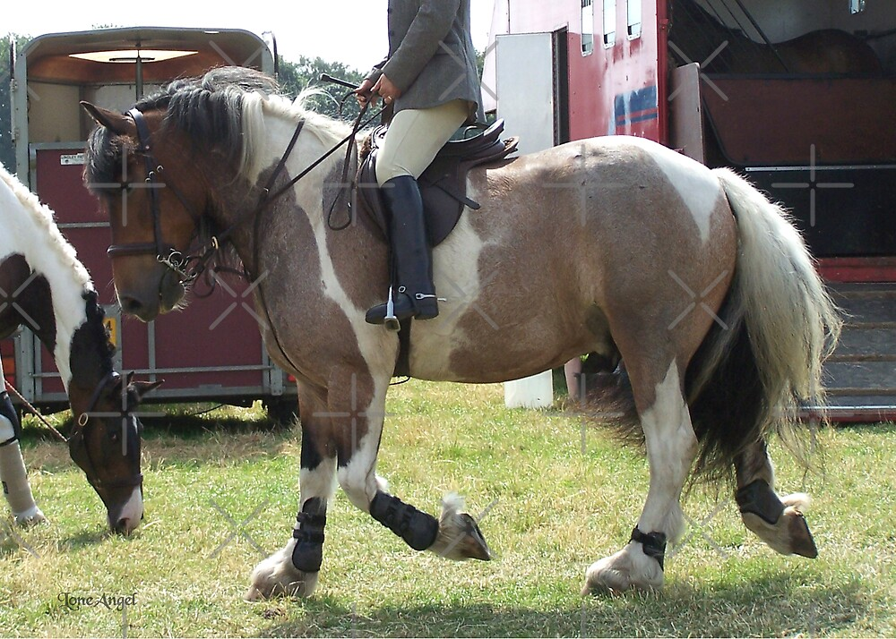 A Show Winner .. paint horse by LoneAngel