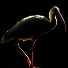 Avian Profile ~ Part 5 by artisandelimage