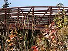 Rust colors of crossing at Northwood Park by Robin Clifton