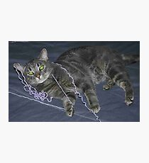 Cat on a String Photographic Print