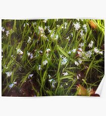 Patch of Spring Poster