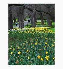 A Walk in Fitzroy Gardens Photographic Print