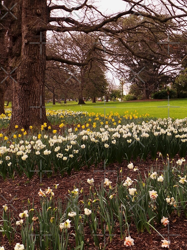 Fitzroy Gardens _ 2 by Sheryle  Griffiths