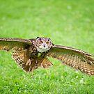 Eagle Owl test flight by Daniel  Parent