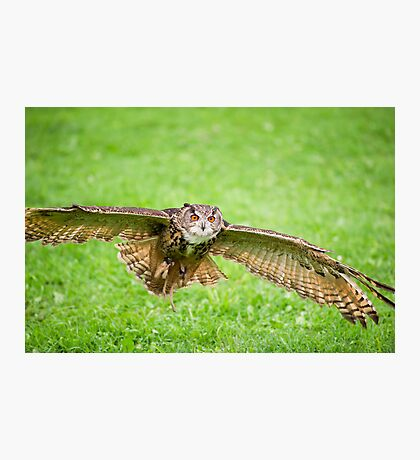 Eagle Owl test flight Photographic Print