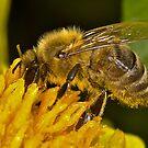 Bee 3 by Gareth Jones