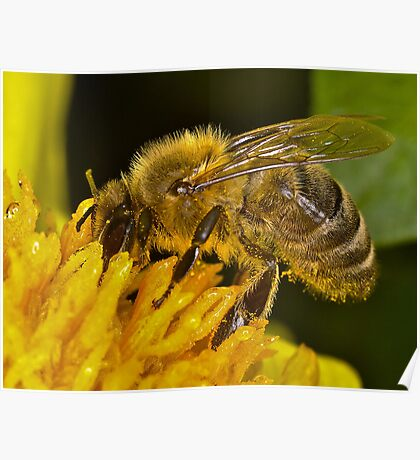 Bee 3 Poster
