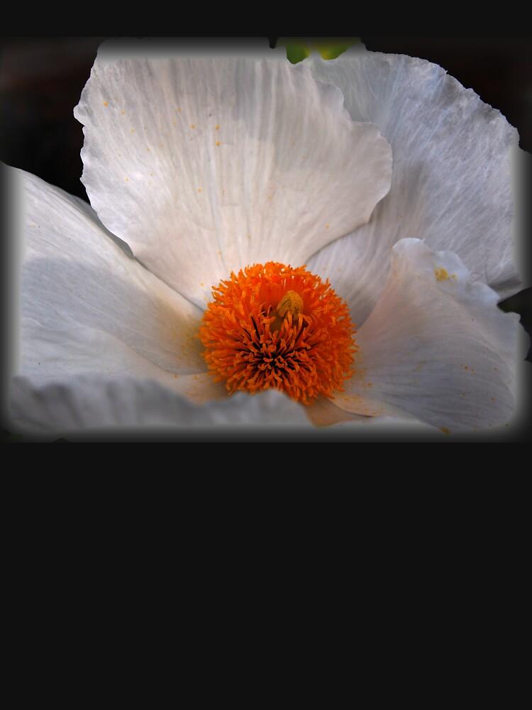 Matilija Poppy by douglasewelch