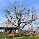 Wishing Tree by raindancerwoman