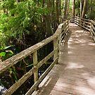 Corkscrew Swamp Boardwalk by Joe Elliott