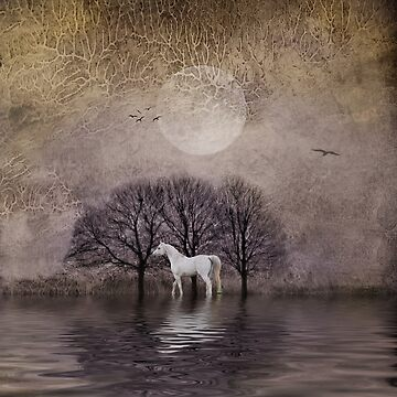 A White Horse in the Pond by PolisFoto