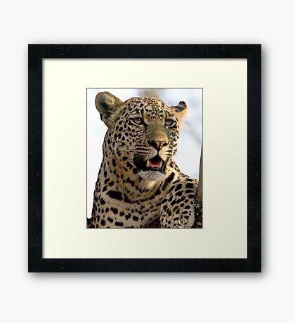 Induna Framed Print