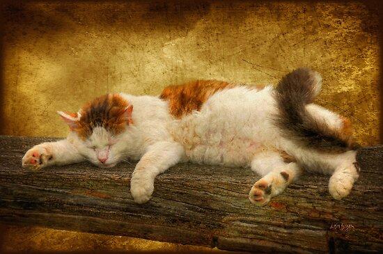 Sleepy Kitty by Lois  Bryan