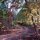 Radiant Path by InvictusPhotog