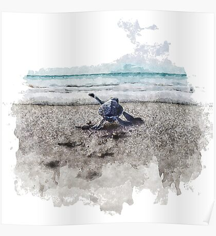 Baby Sea Turtle Waling - Watercolor  Poster
