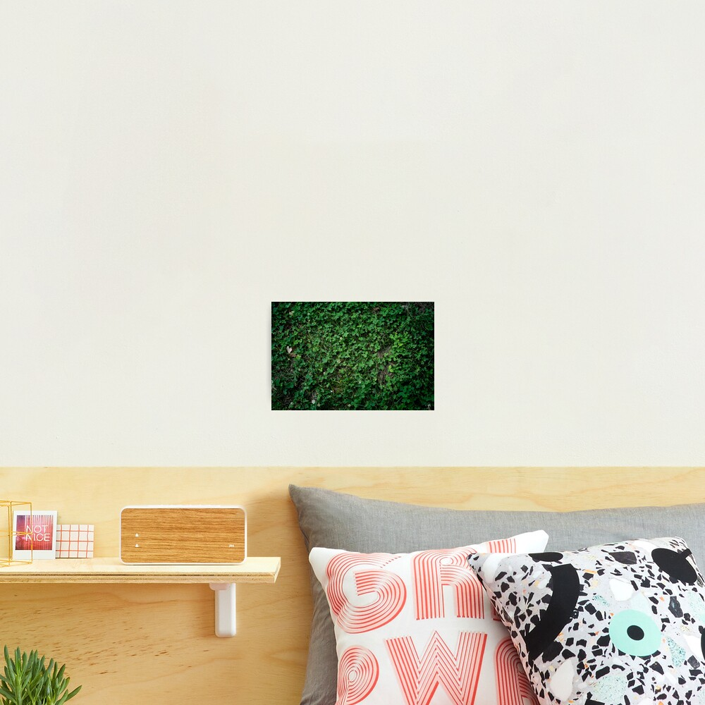 Leafy Wall Photographic Print