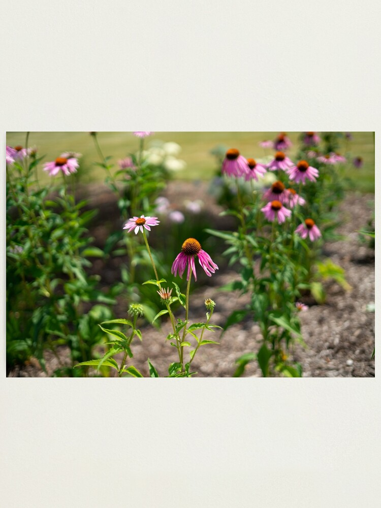 Alternate view of Summer's Lovely Flowers #3 Photographic Print