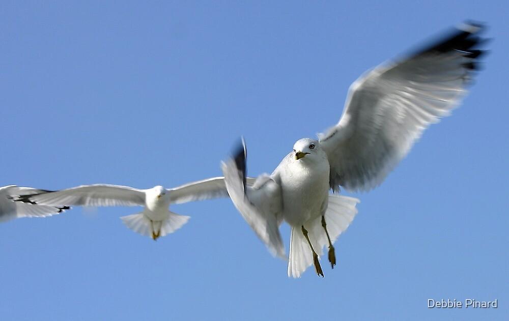 Seagulls in Flight - Sugarloaf Key, Florida by Debbie Pinard