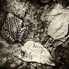 Autumn frog sepia by ser-y-star