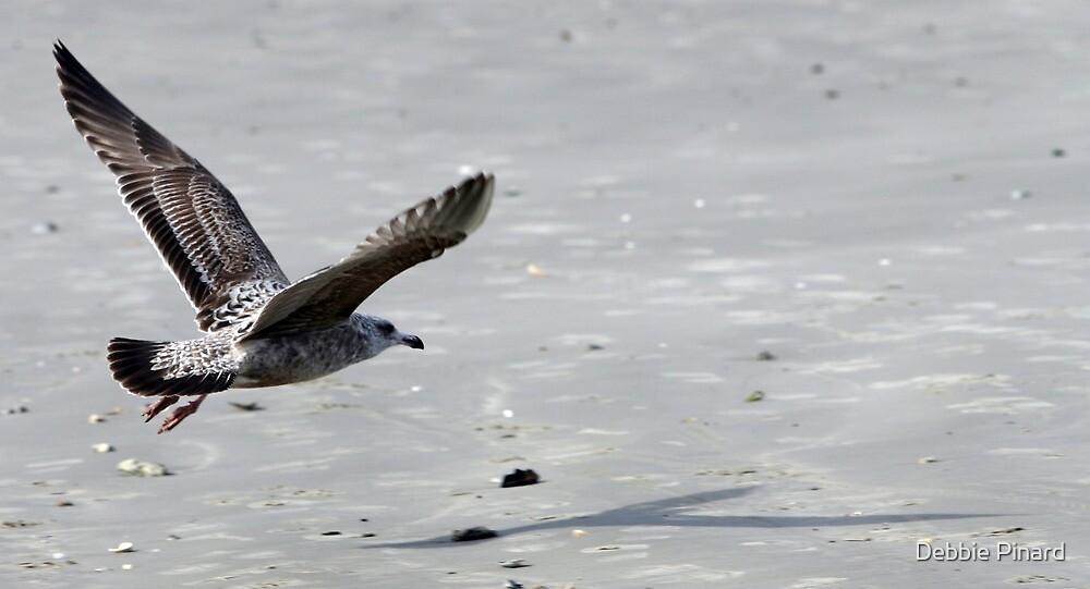 Seagull in Flight - Port Aransas, Texas by Debbie Pinard