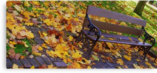 The Park by Paul Finnegan