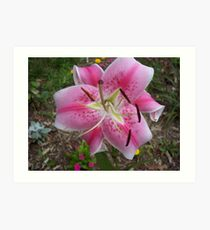 Closeup lily Art Print