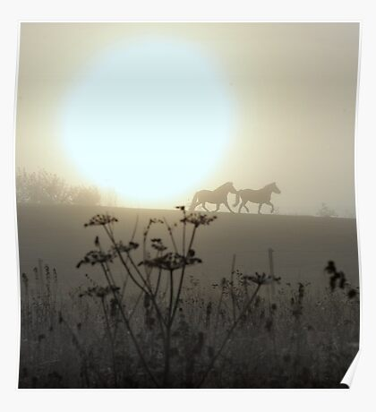 Ponies in the foggy morning Poster